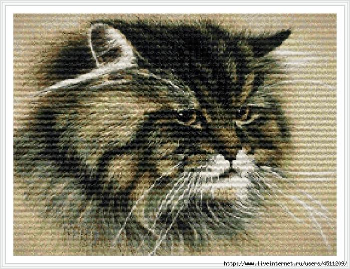 Серъезный кот (700x537, 429Kb)