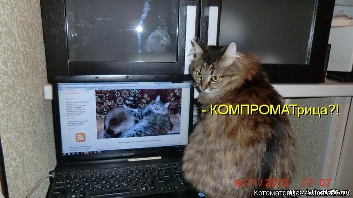 kotomatritsa_0 (700x393, 203Kb)
