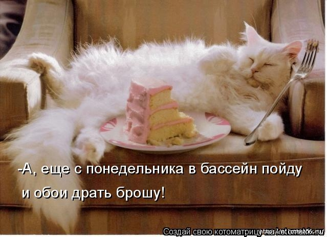 kotomatritsa_b (639x462, 153Kb)