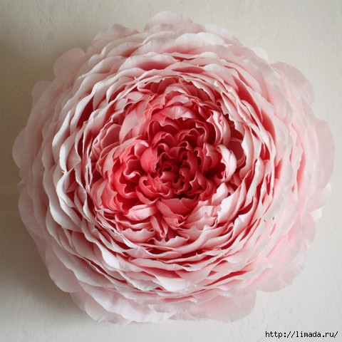 cabbage-rose_large (480x480, 157Kb)
