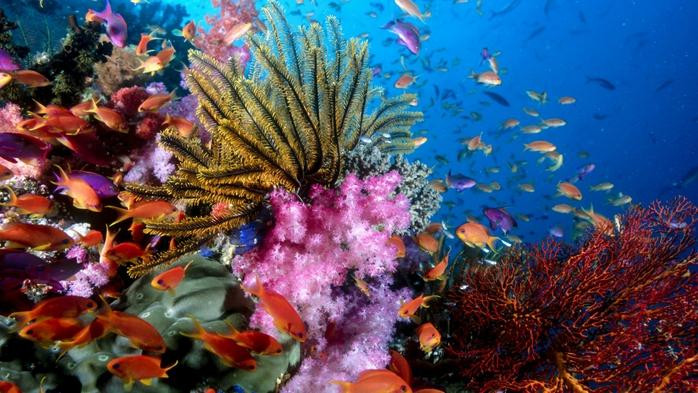 архипелаг Раджа-Ампат фото 10 (700x393, 283Kb)