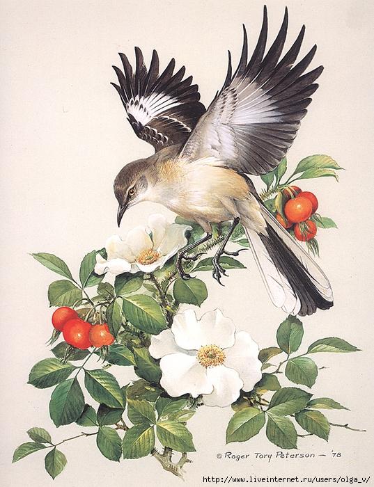 эскизы красивых птиц с цветами как эффективный