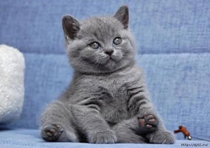 cat (700x496, 125Kb)