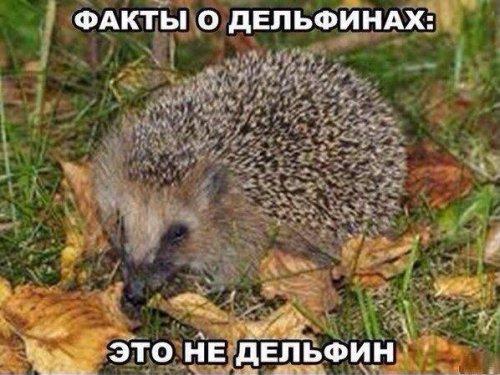 1399372601_foto-prikoly-3 (500x375, 191Kb)