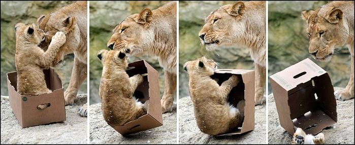 кошки в коробках фото 2 (700x286, 260Kb)