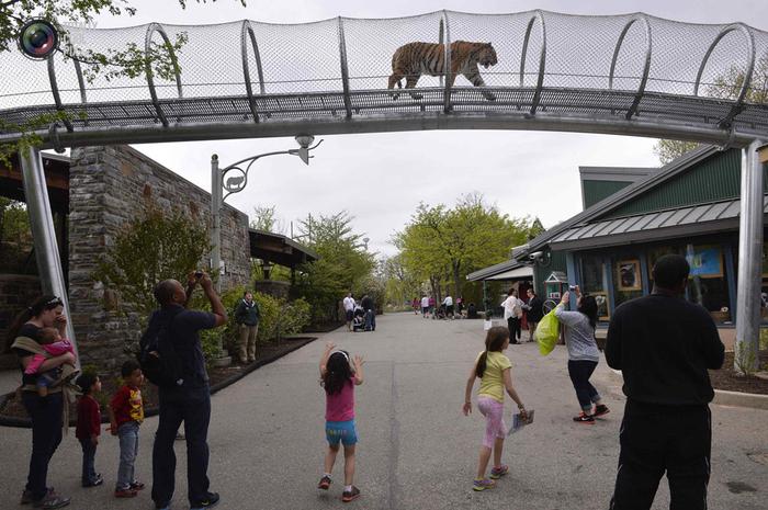 переход для кошек в зоопарке филадельфии 1 (700x465, 359Kb)