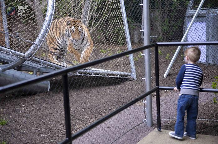 переход для кошек в зоопарке филадельфии 7 (700x465, 455Kb)