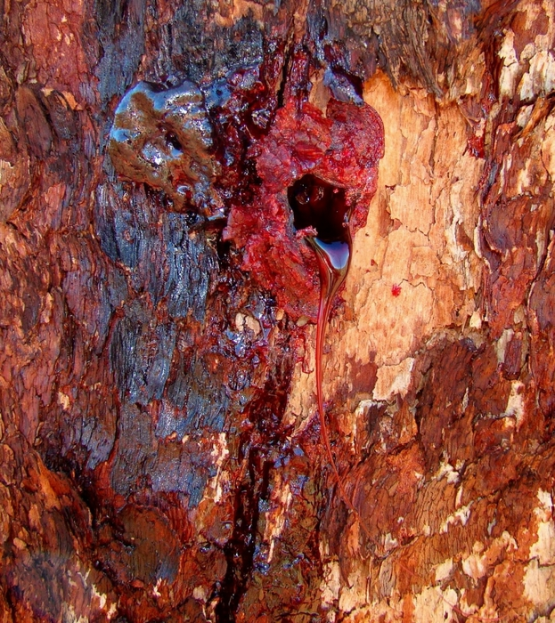 кровавое дерево фото 7 (623x700, 462Kb)