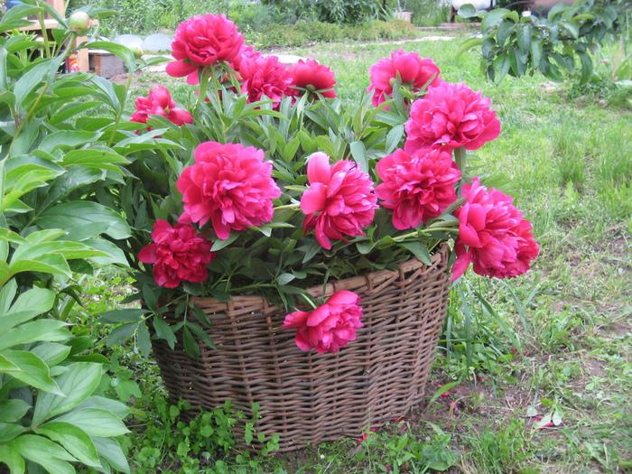 цветы-2011-069 (600x425, 284Kb)