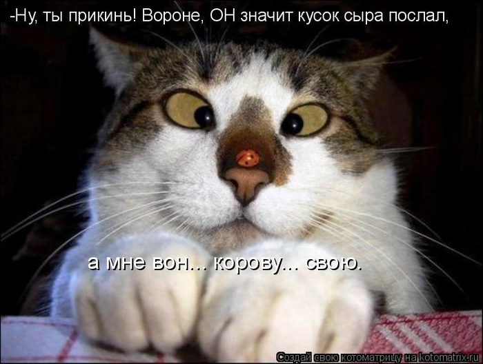 kotomatritsa_HC (700x528, 200Kb)