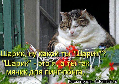 kotomatritsa_12 (491x345, 122Kb)
