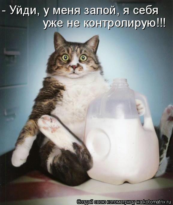 kotomatritsa_j4 (577x683, 117Kb)
