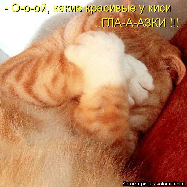 kotomatritsa_sV (612x612, 178Kb)