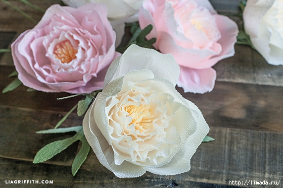 Crepe_Paper_Peony_Template (560x373, 170Kb)