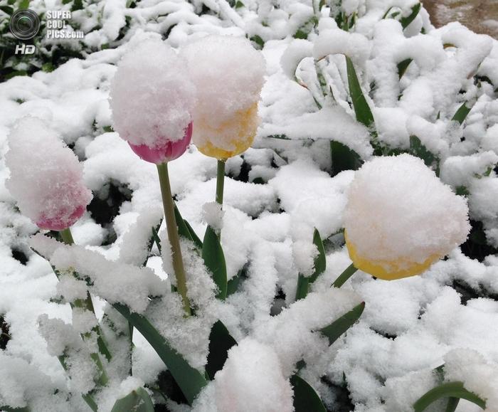 весенний снегопад фото 5 (700x579, 373Kb)