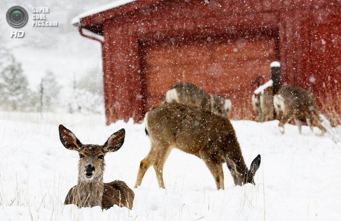 весенний снегопад фото 7 (700x453, 376Kb)