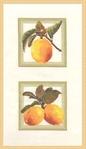 Превью ФС-002 Лимоны (280x486, 40Kb)