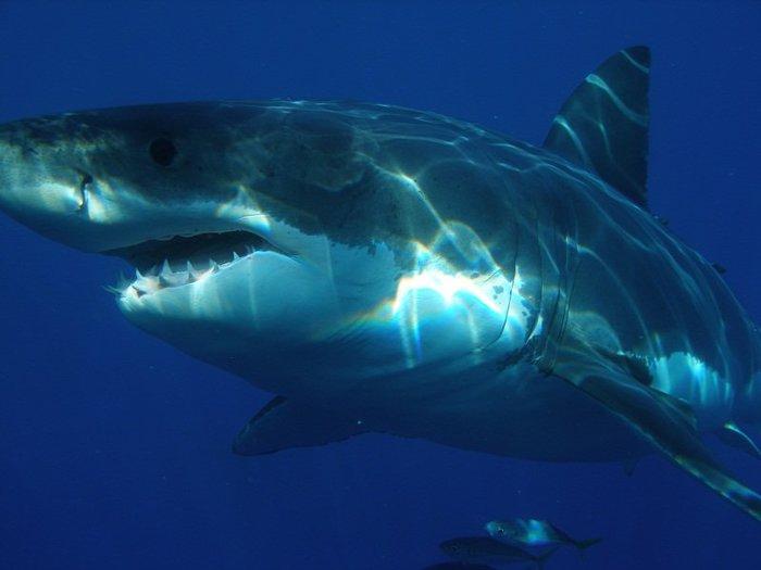 Jersey Shore shark attacks of 1916  Wikipedia