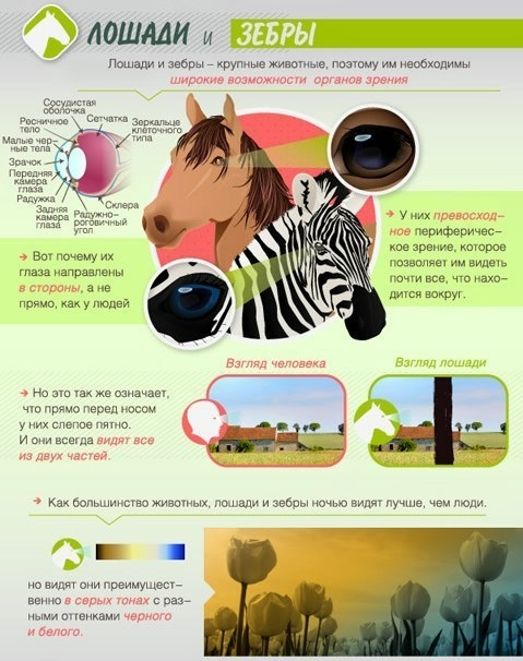 Как животные видят мир2 (479x606, 167Kb)