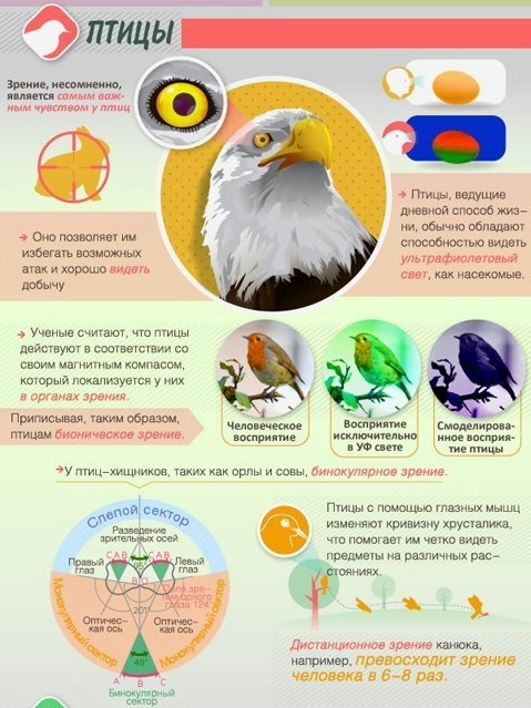 Как животные видят мир4 (479x639, 181Kb)