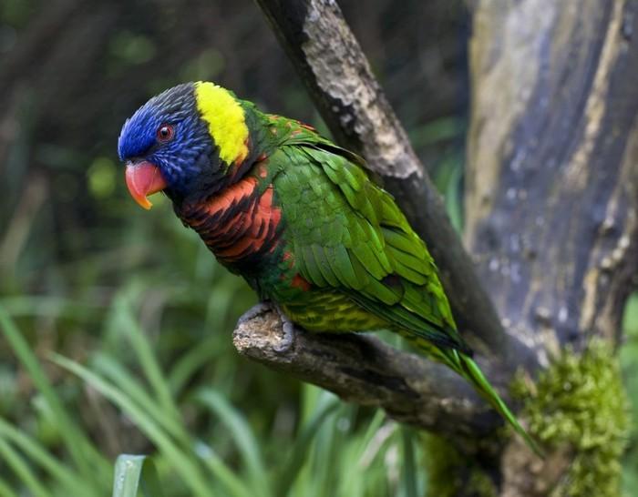 birdie01 (700x546, 75Kb)