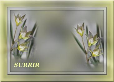 4674007_tuxpi_com_1401789606 (366x266, 38Kb)