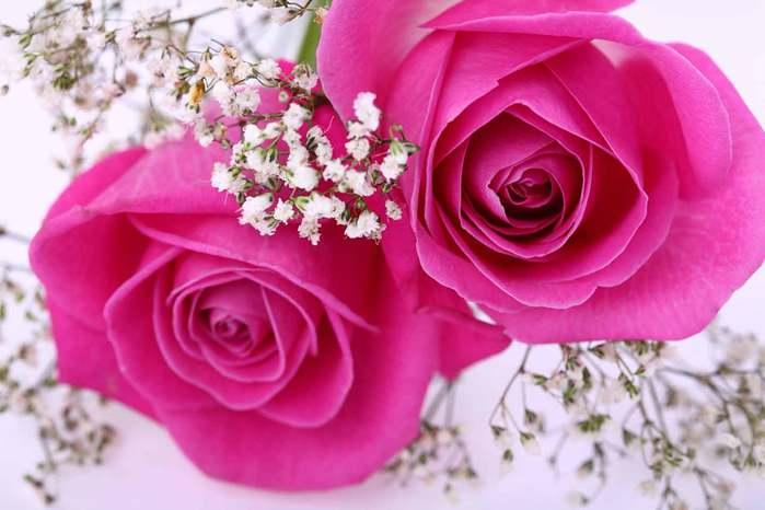 прекрасные-розы (700x466, 38Kb)