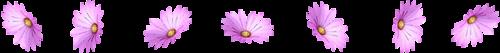 3140201_107360206_0_8783c_687f584_L1 (500x53, 32Kb)