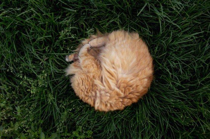 кошачий приют 6 (700x466, 364Kb)