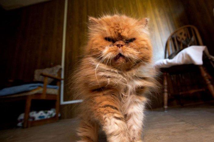 кошачий приют 19 (700x466, 214Kb)