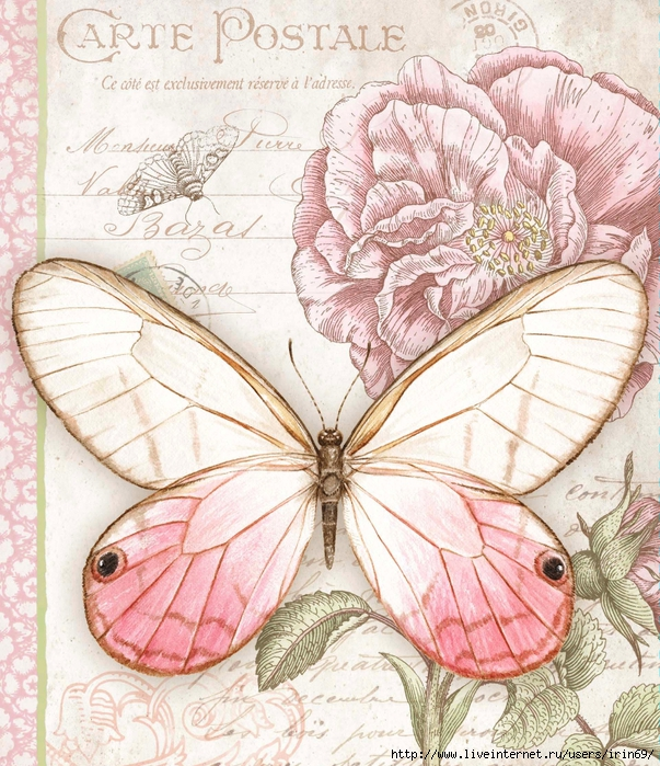 pink-butterfly-address-book-1013230 (603x700, 439Kb)