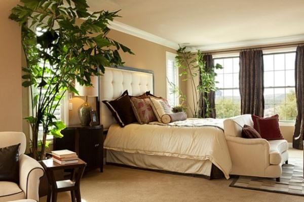 Какие комнатные растения должны быть в спальне/4216969_12341_1_ (600x399, 69Kb)