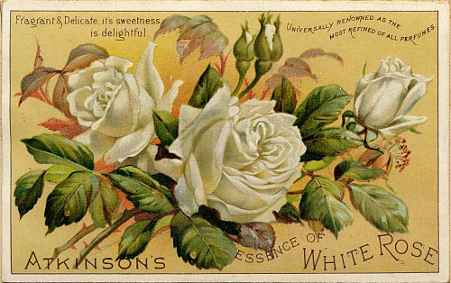 http://img0.liveinternet.ru/images/attach/b/4/113/659/113659418_whiterose.jpg