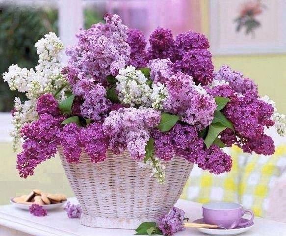 Résultat d'images pour bouquet de lilas en vase photos