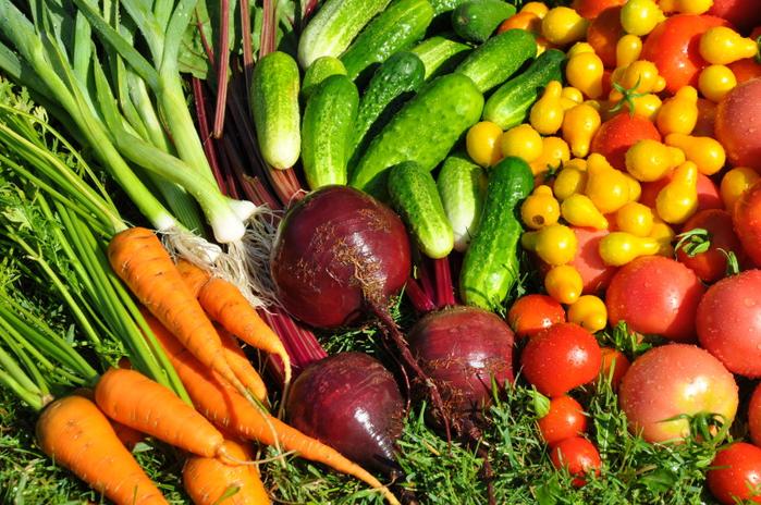 семена овощей (1) (700x464, 530Kb)
