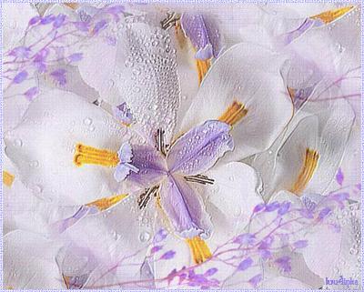Сиреневый-гладиолус (400x321, 270Kb)
