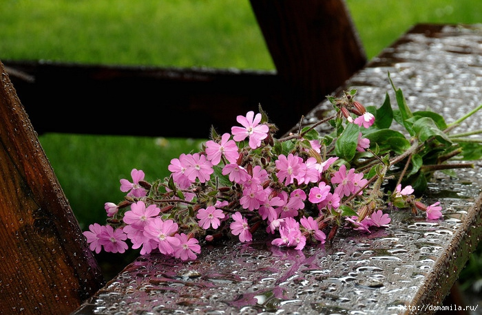 фото цветы обои (700x458, 280Kb)