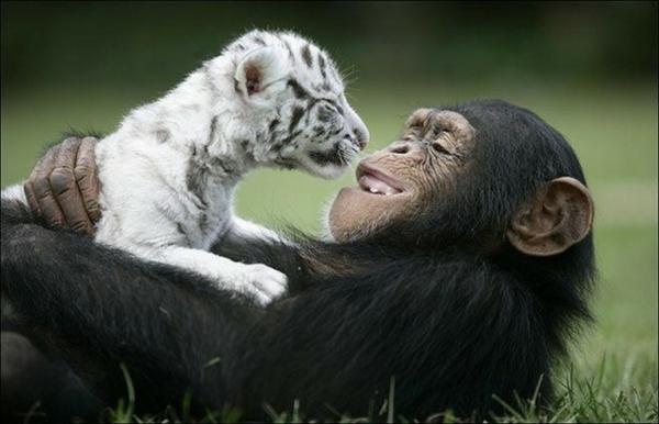 Дружба животных1 (600x386, 142Kb)