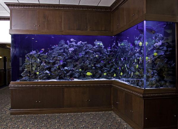 угловой аквариум (600x435, 85Kb)