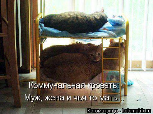 kotomatritsa_II (492x369, 193Kb)