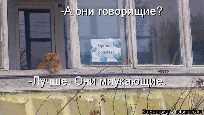 kotomatritsa_J8 (700x393, 236Kb)