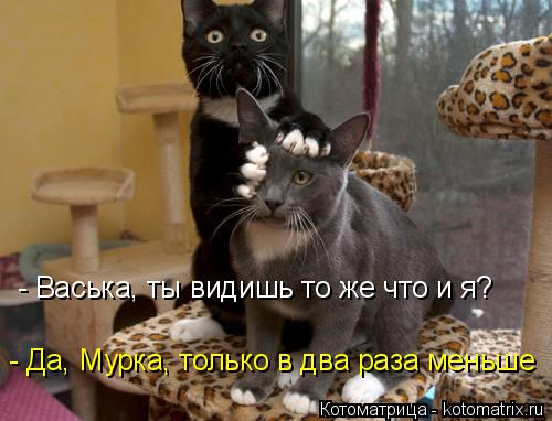 kotomatritsa_LC (500x382, 163Kb)