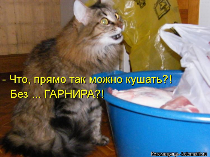 kotomatritsa_Rh (700x524, 356Kb)