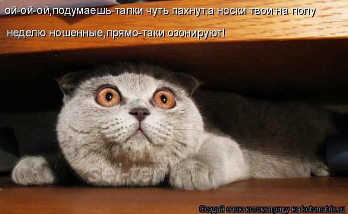 kotomatritsa_X (700x429, 265Kb)