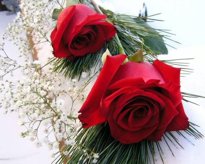 цветы красивые фотографии (21) (700x559, 387Kb)