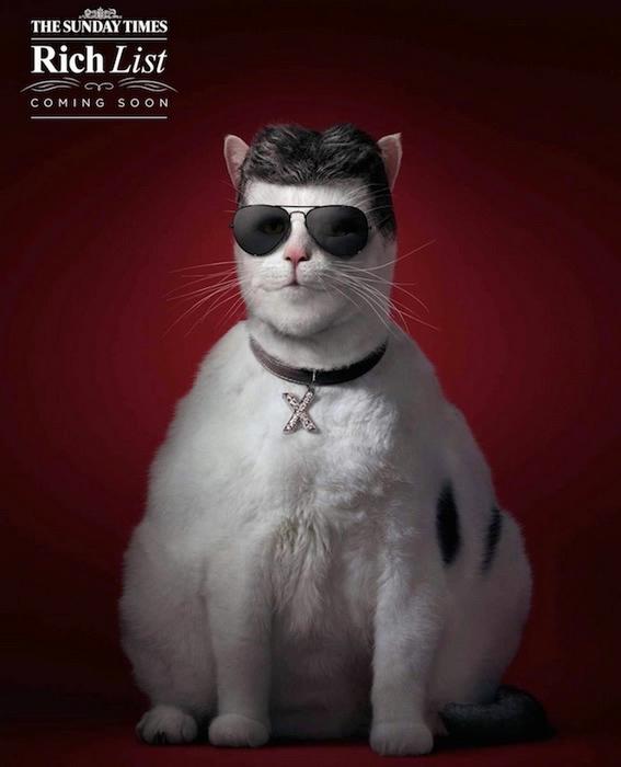 Самые смешные коты в мире приколы