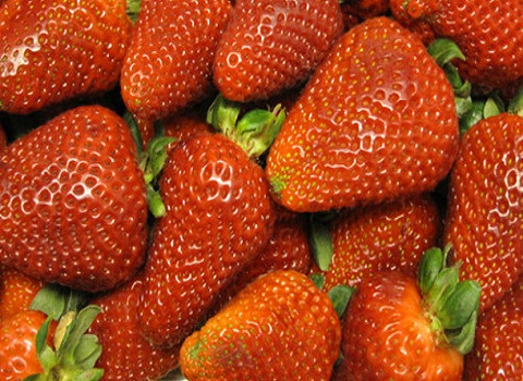 A-strawberry-a-day-keeps-the-oxidative-stress-away_strict_xxl (480x350, 103Kb)