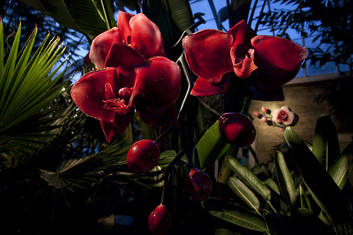 стеклянные цветы 6 (700x466, 367Kb)