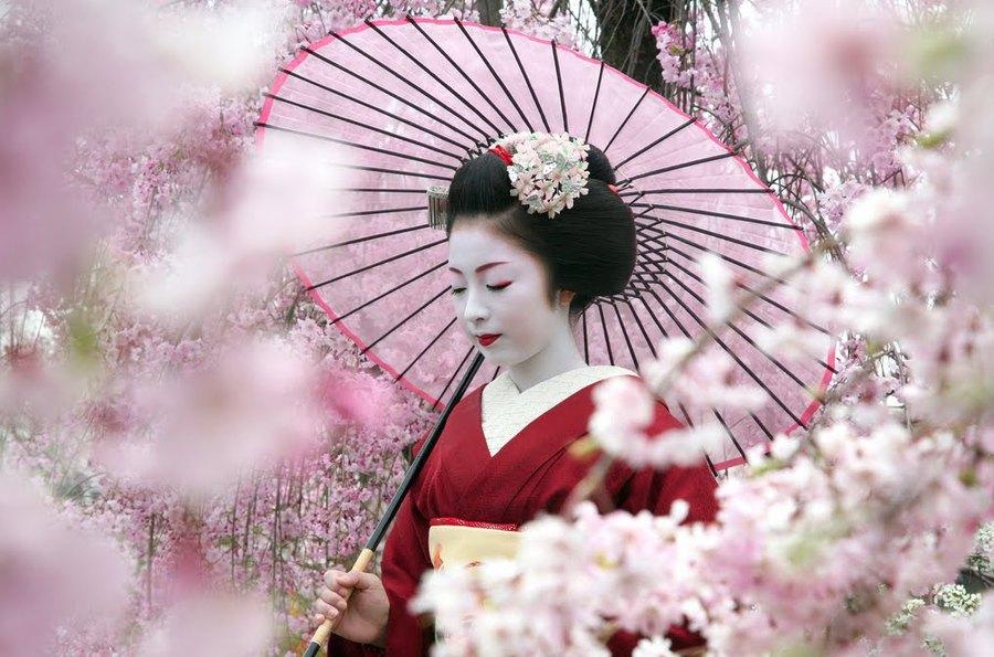 Фото японка с сакурой фото 600-208
