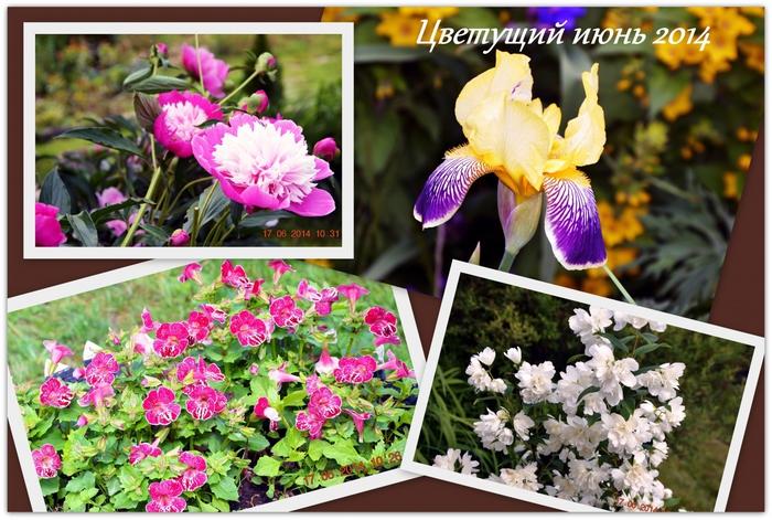 3587765_Cvetyshii_iun (700x471, 306Kb)